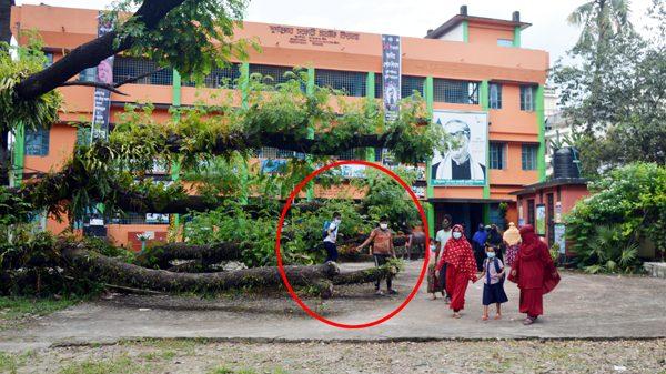 আড়াই মাসেও অপসারণ হয়নি উপচে পড়া রেইন্ট্রি গাছ, ঝুঁকির মধ্যে দূর্গাকুমার স্কুলের শিক্ষার্থীরা